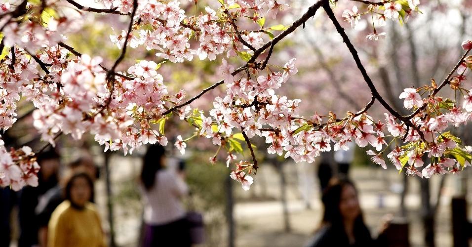 17.mar.2014 - Cerejeiras em flor no parque Gucun, na cidade de Xangai, na China. A cidade terá um festival de flores em 30 de março