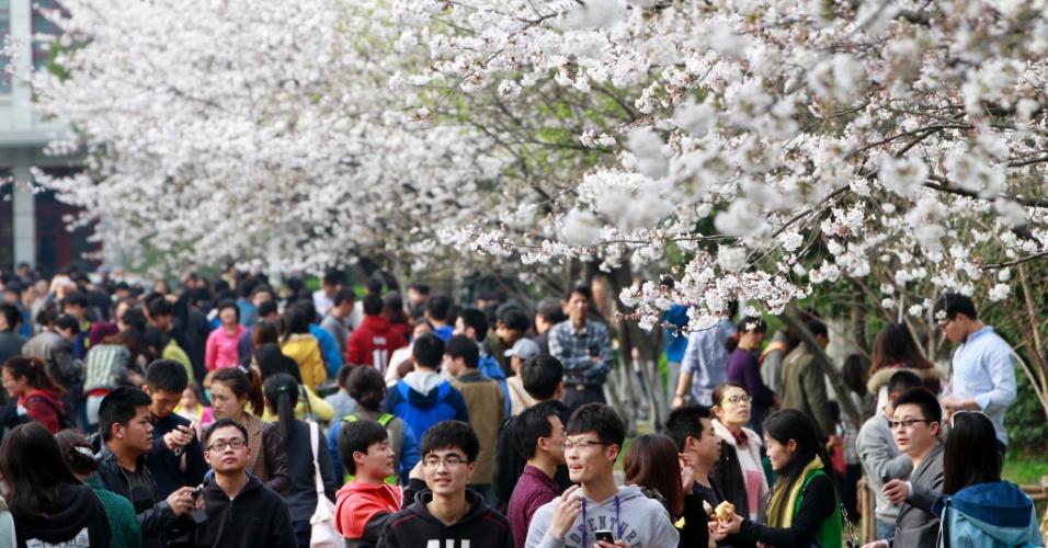 23.mar.2014 - Cerejeiras com flores brancas enfeitam a Universidade de Nanjing, na província chinesa de Jiangsu