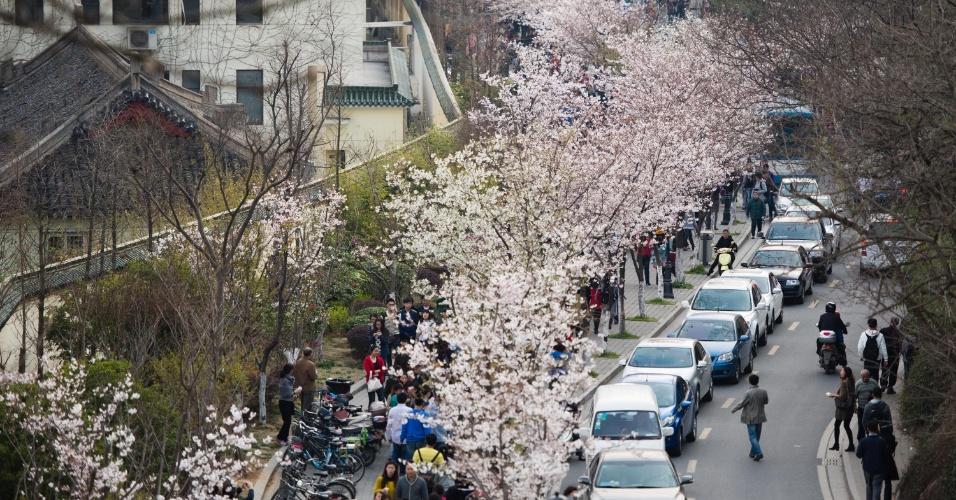 23.mar.2014 - Cerejeiras com flores brancas enfeitam rua próxima ao templo de Jiming, em Nanjing, na China