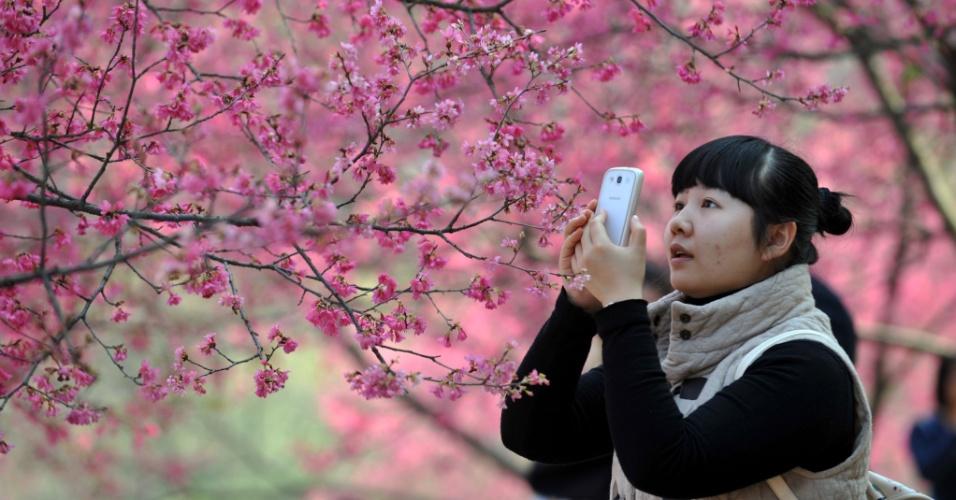 2.fev.2014 - Mulher fotografa flores de cerejeira em parque em Nanning, na China