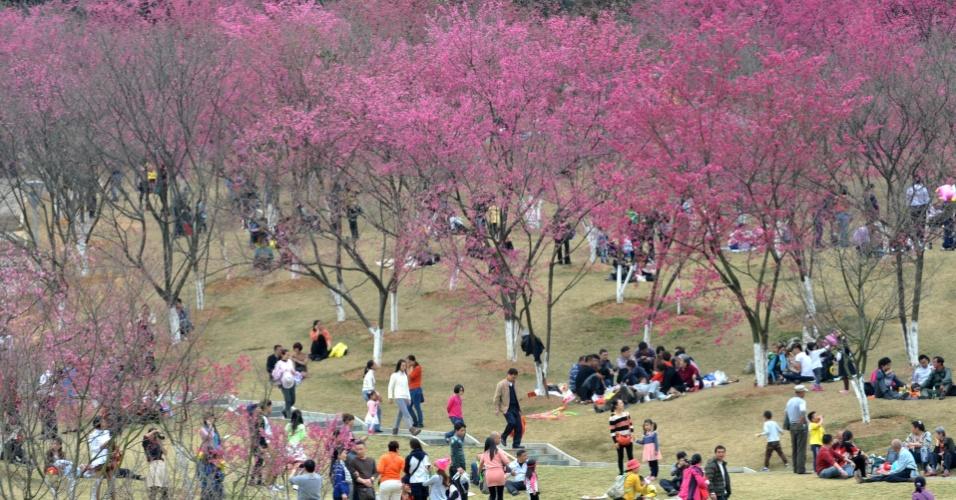2.fev.2014 - Visitantes de parque em Nanning, na China, observam cerejeiras em flor