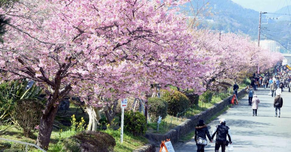 5.mar.2014 - Cerejeiras em flor são admiradas por pedestres em Shizuoka, no Japão