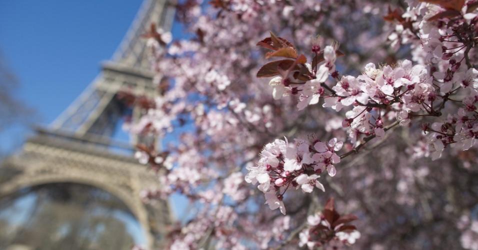 9.mar.2014 - Flores de cerejeira são vistas em jardim em frente à torre Eiffel, em Paris, na França