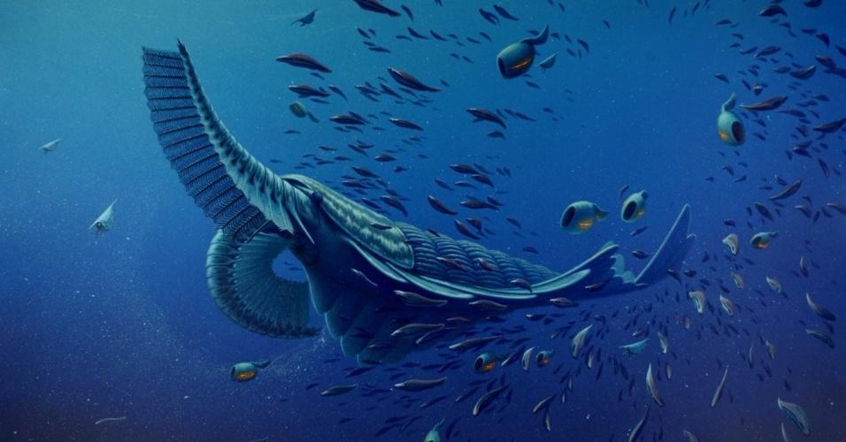 """CAMARÃO GIGANTE DA ERA CAMBRIANA - Concepção artística mostra o """"Tamisiocaris borealis"""", um camarão gigante que dominava as águas durante o período cambriano. Em estudo publicado na Nature, esta criatura marinha que viveu entre 485 e 540 milhões de anos atrás é descrita não como uma predadora como tubarões e baleias, mas tinha o início do que seria a alimentação por filtragem da água do mar. Fósseis do animal, coletados de sedimentos cambrianos no norte da Groenlândia, mostram que a transição para este tipo de alimentação começou cedo na evolução de organismos multicelulares. Em vez de garras para segurar as presas, este usava os apêndices como pentes para juntar plâncton do mar. Os apêndices tinham espinhos finos e espaçados, divididas por espinhos ainda menores, que serviam para capturar o alimento. A presença deste """"filtro"""" sugere ainda que existia grande quantidade de plâncton no cambriano"""