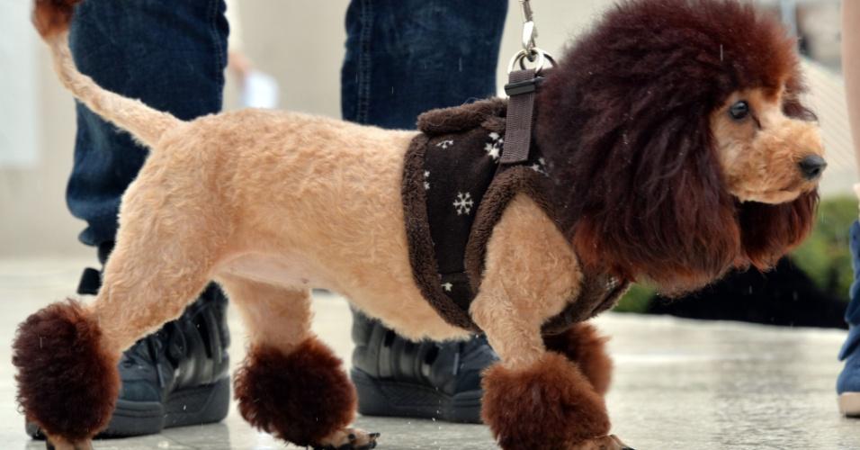 5.abr.2014 - Cão que teve pelos aparados para se parecer com um leão participa de evento de loja em Tóquio, no Japão. Donos reuniram cem cães para celebrar o 100º aniversário do leão mascote da loja Mitsukoshi