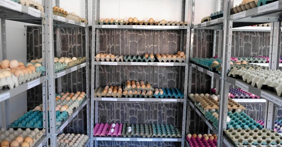 Os ovos são armazenados em um galpão até o momento da eclosão, ou seja, nascimento do pintinho, ou até ser vendido aos clientes. De acordo com Mário Salviato, os ovos devem ser enviados com até 10 dias após a galinha botá-los
