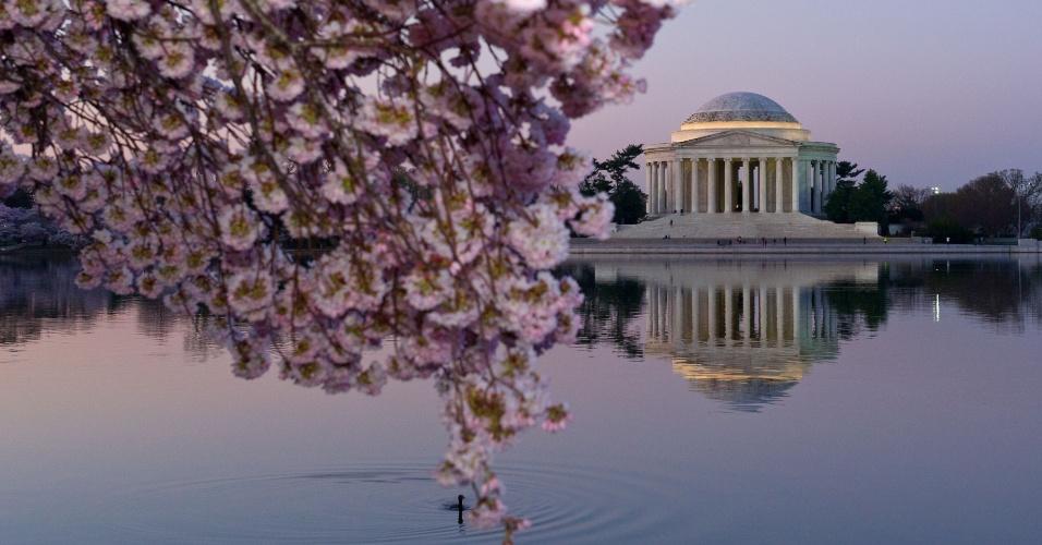 10.abr.2014 - Cerejeiras florescem perto do Jefferson Memorial, em Washington, nos EUA. As árvores devem chegar ao pico de florescimento nas próximas semanas. As primeiras cerejeiras do entorno do edifício foram plantadas em março de 1912