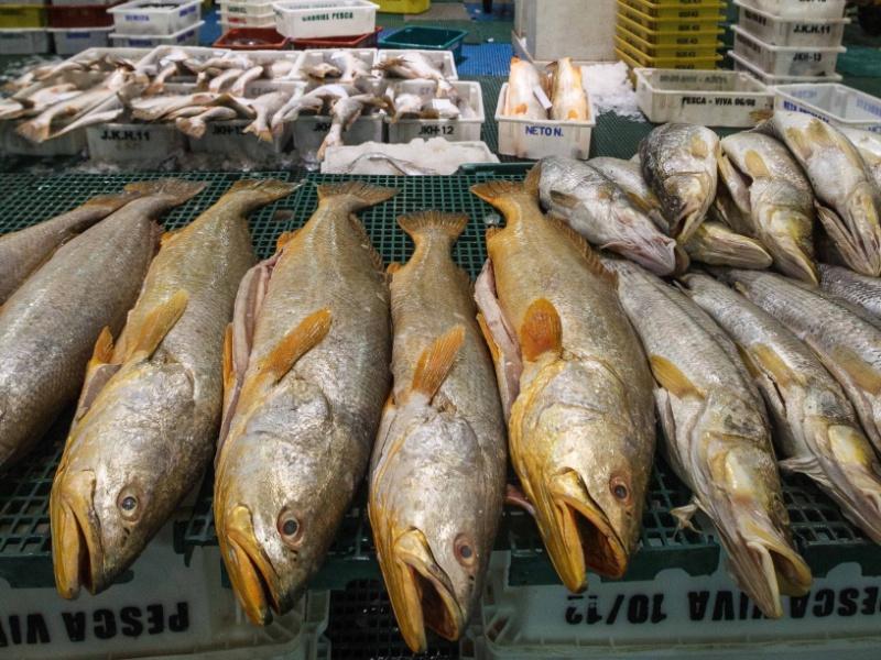 peixes na Ceagesp