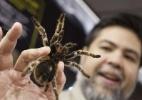 Desmatamento gastronomia do Camboja colocam em risco as tarântulas - Zou Zheng/Xinhua