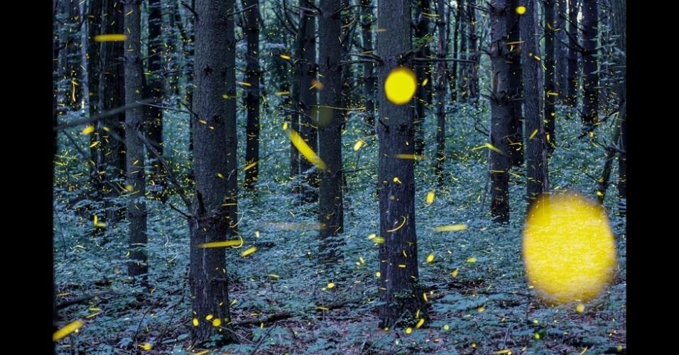 19.abr.2014 - O fotógrafo Vincent Brady, 25, brincou com o tempo de captura da luz de sua câmera para fazer uma série de fotos de vaga-lumes. As fotos foram feitas em dois locais, o lago de Ozarks, no estado americano do Missouri, e no Grand Ledge, em Michigan. Os vaga-lumes machos usam a luz para impressionar as fêmeas. Eles piscam e, se elas gostarem, piscam de vota. Caso contrário, ficam quietinhas no escuro