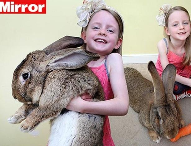 Darius, o maior coelho do mundo, come 4.000 cenouras por ano. Ele mede 1,32 m e tem quase o mesmo tamanho que a garota Mia (na foto), 6. A menina é uma amiga de Annette Edwards, dona do coelho - Reprodução/Mirror