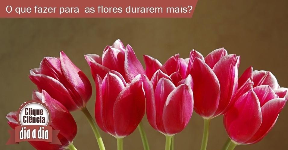 Clique Ciência - Dia a dia - O que fazer para as flores durarem mais após cortadas?