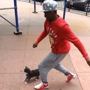 No vídeo, Robinson agrada gato para depois chutá-lo - Reprodução