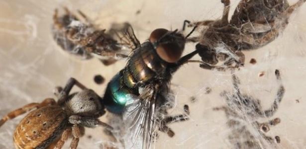 Genoma da aranha estimula busca por segredos do aracnídeo
