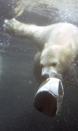 13.mai.2014 - Lale, uma jovem urso polar fêmea, brinca com uma bola no Zoo am Meer (zoológico  perto do mar), em Bremerhaven,  Alemanha. O animal nasceu em 16 de dezembro de 2013