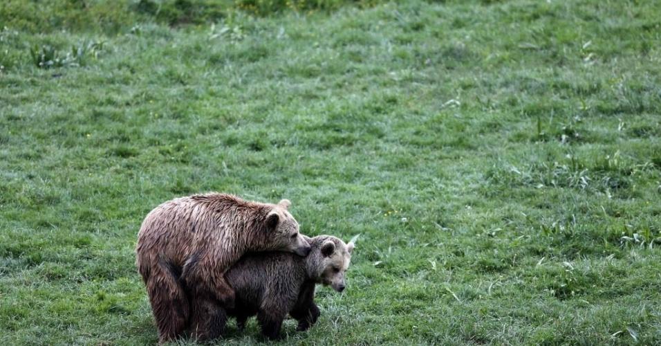 """14.mai.2014 - Ursos interagem em seu espaço no santuário """"Libearty?, na Romênia. O espaço é o maior santuário de ursos da Europa, lar de 78 animais, muitos resgatados de zoológicos em ruínas"""