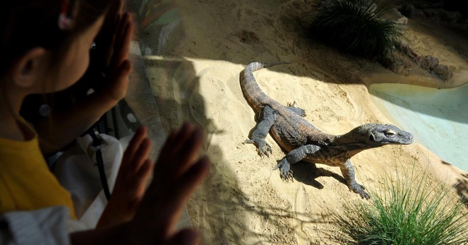 15.mai.2014 - Visitantes observam um dragão de Komodo chamado Ivan, nesta quinta-feira (15), no zoológico Bioparco em Roma