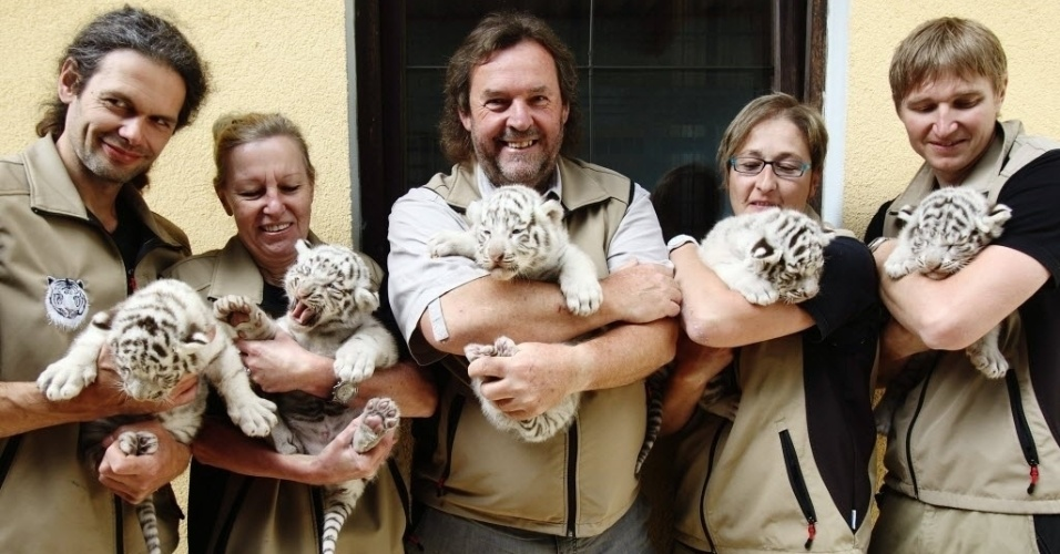 26.mai.2014 - Cinco filhotes de tigres-de-bengala brancos nascidos em zoológico da Áustria são apresentados ao público nesta segunda-feira (26). Os animais nasceram no dia 25 de abril