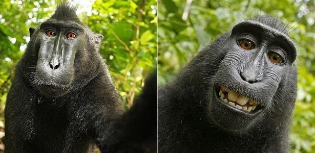 """""""Selfie"""" de macaco foi registrada na Indonésia, com a câmera do fotógrafo profissional David Slater - Reprodução/Daily Mail"""