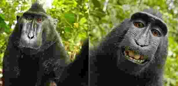 Macaco Naturo tira famosa - e polêmica - selfie em 2011; imagem rendeu disputa judicial - Reprodução/Daily Mail  - Reprodução/Daily Mail