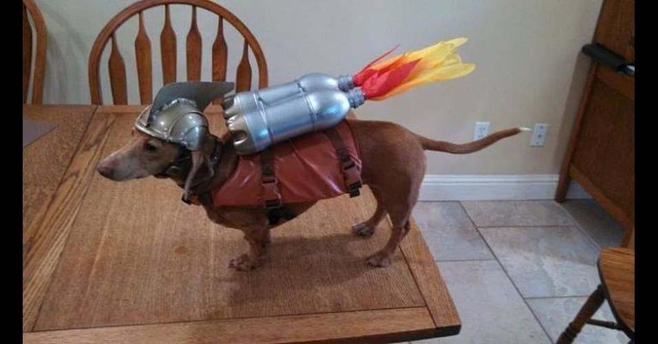 Crusoe é um cachorro da raça dachshund (conhecida como salsicha). Nascido no Canadá, o animalzinho adora nadar e já fez até um comercial para uma marca de produtos de esportes radicais. Segundo seu dono, Crusoe recebeu esse nome por causa do seu ?excepcional senso de aventura?