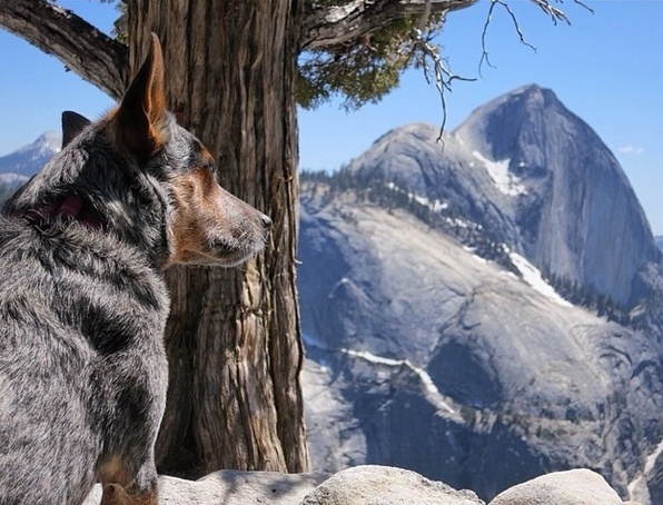 29.mai.2014 - A cadela Whisper se tornou o primeiro cachorro a saltar de base jump no mundo. O alpinista Dean Potter levou a melhor amiga para saltar da montanha Eiger, na região dos Alpes Berneses, na Suíça