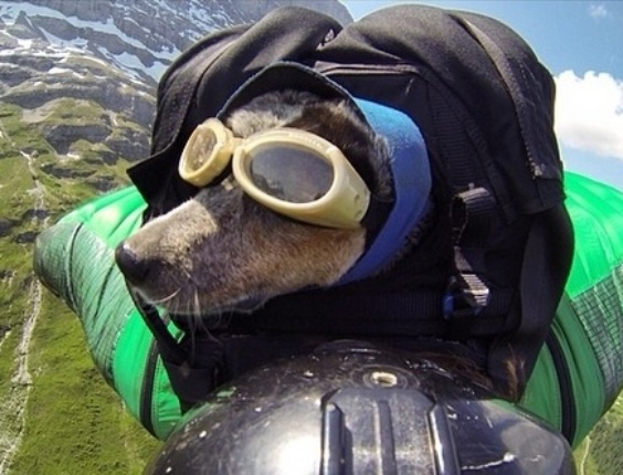 29.mai.2014 - O alpinista Dean Potter colocou a cadela Whisper dentro de uma mochila saltarem juntos da montanha Eiger, na região dos Alpes Berneses, na Suíça
