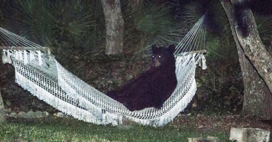 2.jun.2014 - Um urso preto deitou-se para descansar em uma rede pendurada em uma residência em Daytona Beach, Flórida (EUA). O urso usou a rede por cerca de 15 minutos antes de assustar quando as luzes do quintal foram acesas