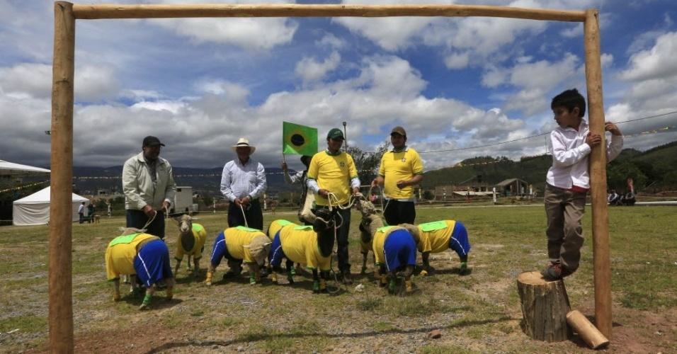 3.jun.2014 - Agricultores seguram as ovelhas da seleção brasileira de futebol