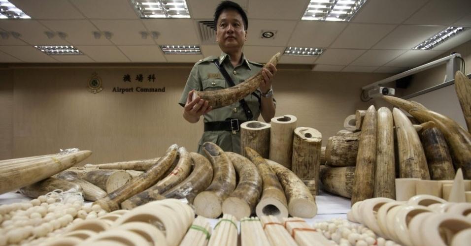 10.jun.2014 - Oficial mostra marfim confiscado no aeroporto internacional de Hong Jong, em Hong Kong, na China, nesta terça-feira (10). Ao todo, 790 quilos de marfim foram apreendidos na bagagem de 15 passageiros vietnamitas. De acordo com entidades de proteção de espécies ameaçadas, 20% dos 100 mil elefantes da África correm o risco de entrar em extinção na próxima década devido ao comércio ilegal de marfim
