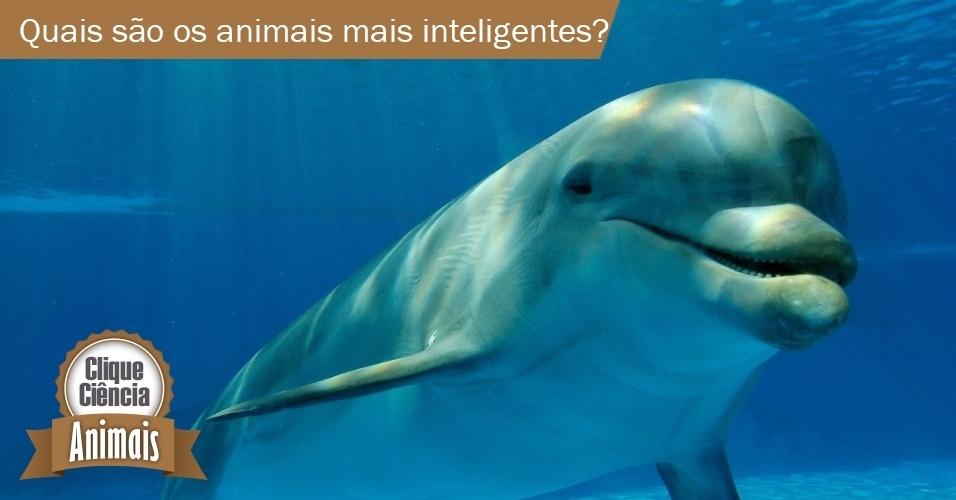 10.jun.2014- clique ciência: quais animais são os mais inteligentes?