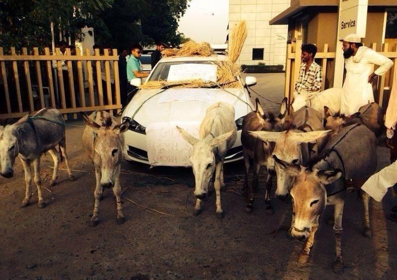 11.jun.2014 - Irritado com as constantes quebras do seu carro Jaguar XJ, que custou o equivalente a R$ 198 mil, o indiano Rahul Thackreym, 38, resolveu amarrar burros para poder andar no veículo