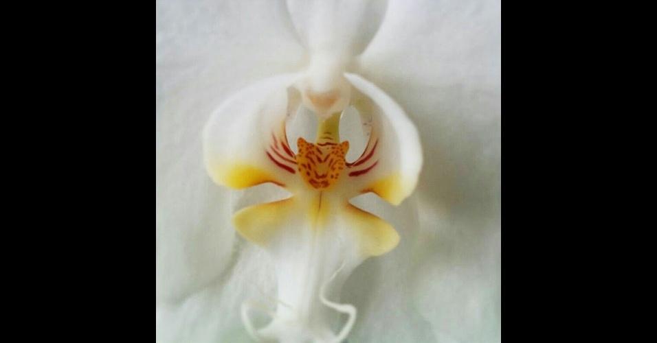18.jun.2014 - A natureza tem surpresas incríveis: as flores trazem formas e cores que as fazem parecer com bichos e até gente. Acima, uma orquídea que no centro da pétala a face de um tigre