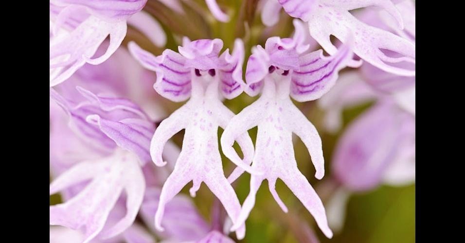 18.jun.2014 - A natureza tem surpresas incríveis: as flores trazem formas e cores que as fazem parecer com bichos e até gente. Acima, a orquídea (Orchis Italica) lembra homens pelados