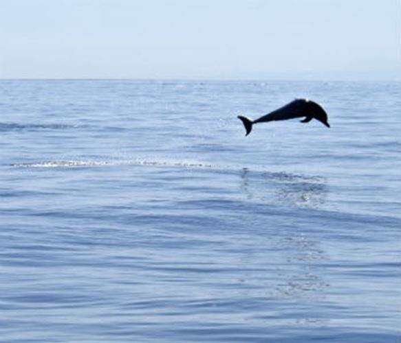 19.jun.2014 - Segundo uma estimativa do Programa da ONU para o Meio Ambiente, Pnuma, o desperdício de plástico causa um prejuízo de US$ 13 bilhões por ano. O plástico acumulado pode ser ingerido por animais, como tartarugas, pássaros e peixes, causando morte ou doenças; pode aprisionar golfinhos e baleias e causar danos a recifes de corais