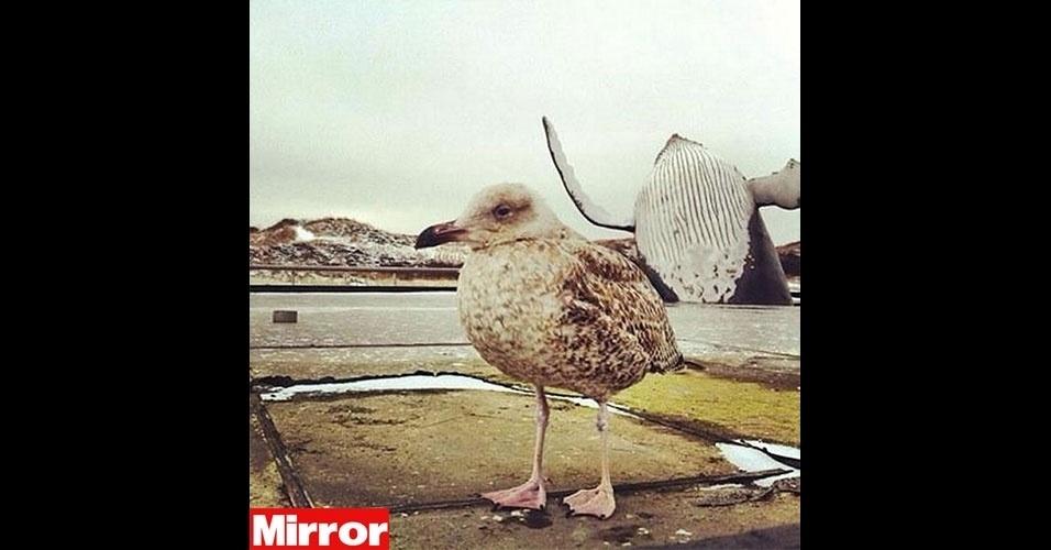 """O jornal britânico """"Mirror"""" escolheu os melhores photobombs (termo em inglês que consiste em algo ou alguém aparecer inesperadamente em uma foto provocando um efeito engraçado) envolvendo bichos. Na foto, uma baleia interfere na foto da baleia"""