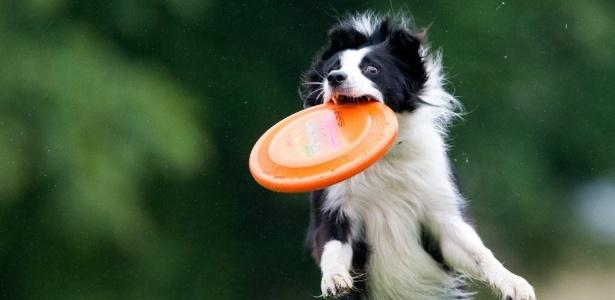Na Alemanha, cidades cobram imposto para quem quiser ser dono de um cachorro