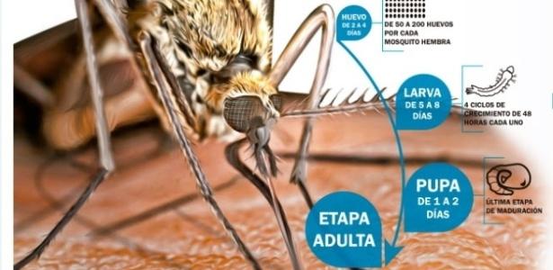 Ilustração do mosquito fêmea Aedes albopictus