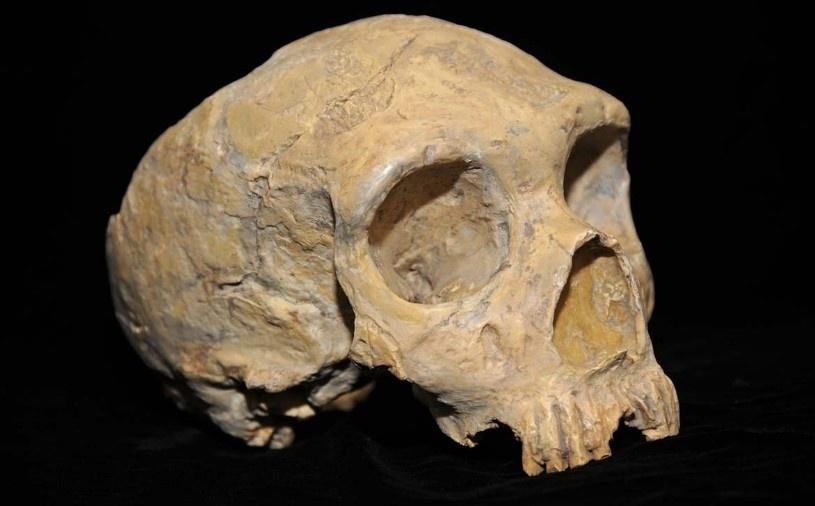 9.jul.2014 - Esqueleto humano encontrado na China tem estrutura da orelha semelhante a de um Neandertal, o que pode sugerir que os neandertais migraram e conviveram com humanos arcaicos na região asiática. A descoberta foi publicada na edição dessa semana do periódico da Academia Nacional de Ciências dos EUA