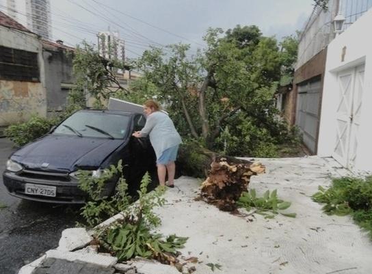 Chuvas causaram estragos em várias partes do país. Em São Paulo, uma árvore caiu sobre um automóvel