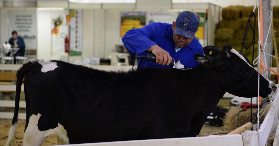 Um espaço aconchegante desenvolvido especialmente para promover o bem-estar das vacas está sendo exibido no Rural Show 2014, evento que ocorre em Nova Petrópolis (RS)