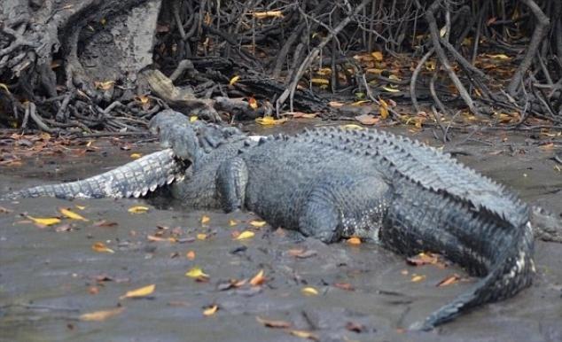 22.jul.2014 - Um guia de pesca australiano capturou o momento em que m crocodilo de cinco metros devorou um de três metros, Warren Smith, que trabalha nas ilhas Tiwi, registrou o momento enquanto estava pescando
