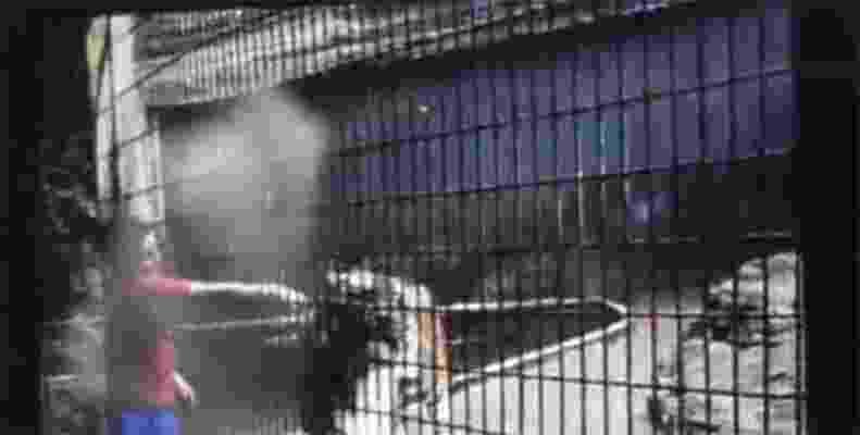 31.jul.2014 - Um menino de 11 anos de idade teve o braço amputado após ser atacado por um tigre no zoológico da cidade de Cascavel, na região oeste do Paraná - Reprodução