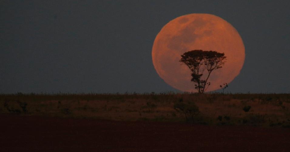 10.ago.2014 - Superlua ilumina árvore em Brasília. O fenômeno ocorre quando a Lua cheia coincide com o momento em que ela está mais próxima da Terra. Esta é a maior superlua do ano