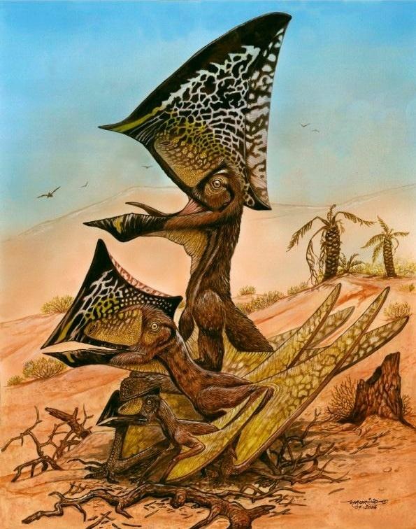 13.ago.2014 - Ilustração traz três fases de crescimento do pterossauro Caiuajara