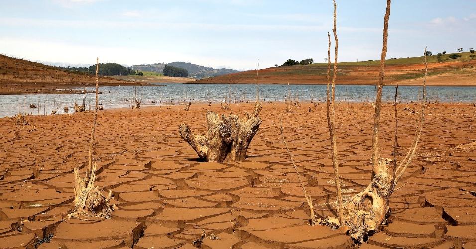 15.ago.2014 - Raízes secas ficam aparentes devido a seca que atinge a região da represa Jaguari-Jacareí, na cidade de Joanópolis, no interior de São Paulo, nesta sexta-feira (15). O índice que mede o volume de água armazenado no sistema Cantareira é de apenas 13,2% de sua capacidade total