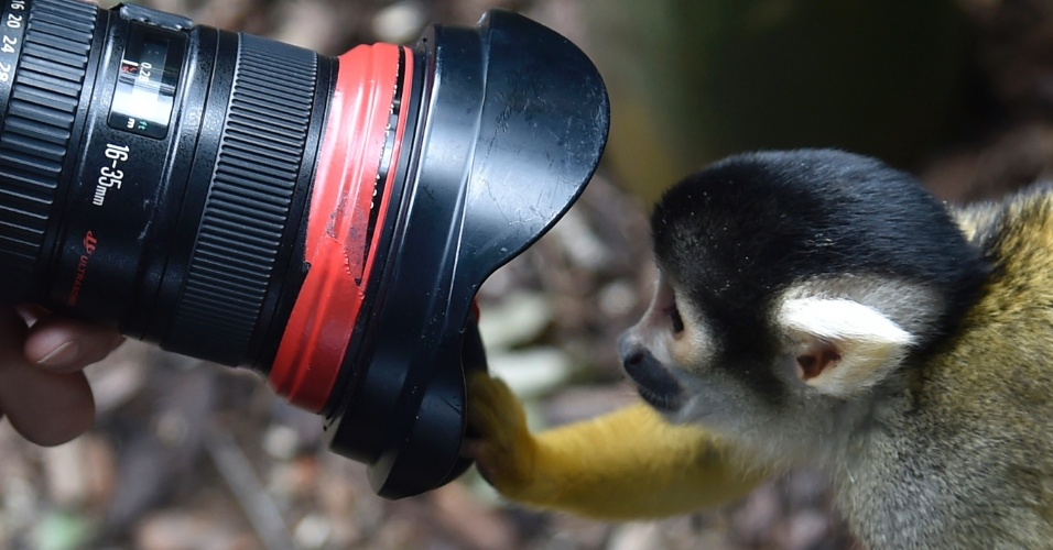21.ago.2014 - Um macaco esquilo espia dentro da lente de um fotógrafo durante sessão de fotos no zoológico de Londes, nesta quinta-feira. Uma vez por ano, a instituição faz uma espécie de inventário de todos os animais, coletando o peso, altura e outras características