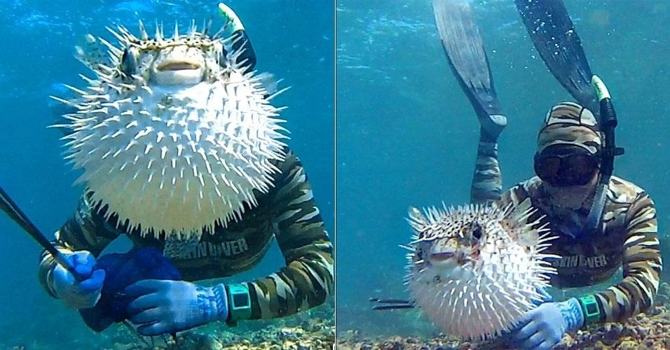 O photobomb com um baiacu foi registrado no Havaí pelo fotógrafo Regan Mizuguchi. Ao ''Daily Mail'', ele contou que estava fazendo selfies quando o peixe invadiu sua foto ? em uma delas, cobrindo completamente o rosto de Mizuguchi.