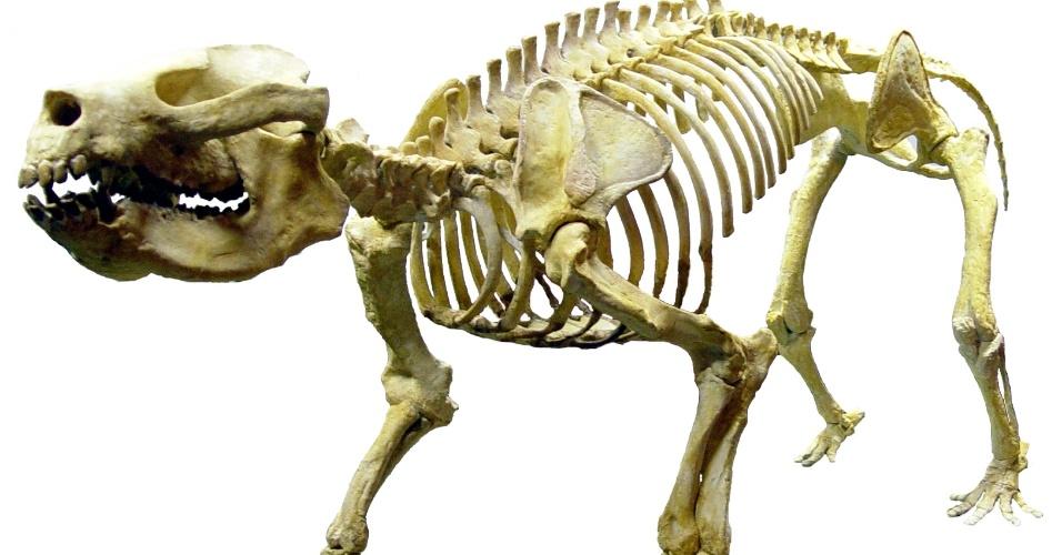 Fóssil de mamífero que viveu há 55 milhões de anos será resgatado no Rio