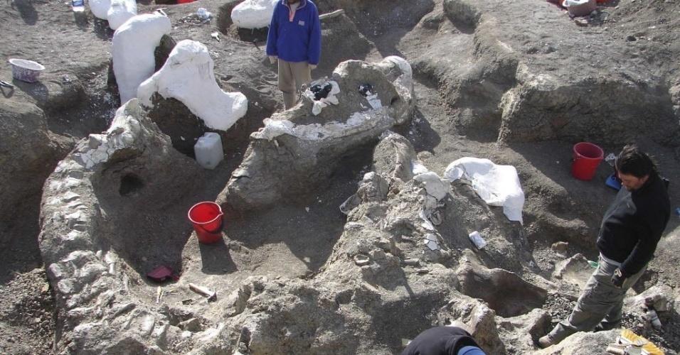 4.set.2014 - O esqueleto de um Dreadnoughtus schrani é exposto em sítio arqueológico durante escavação na Argentina, em foto tirada em 2006 e divulgada nesta quarta-feira (3). Os cientistas anunciaram hoje a descoberta no sul da Patagônia argentina do fóssil bem preservado e completo do dinossauro que pesava 65 toneladas e media 26 metros, com um pescoço de 11,3 metros e uma cauda de 8,7 metros